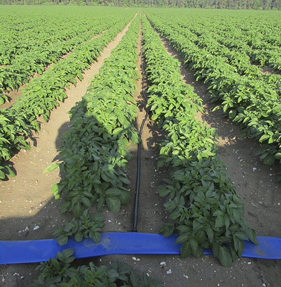 Drip Irrigation - Tech