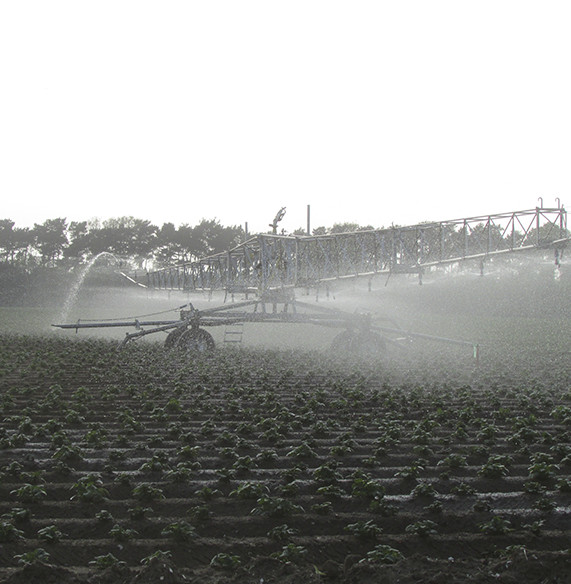 Crop - Irrigation