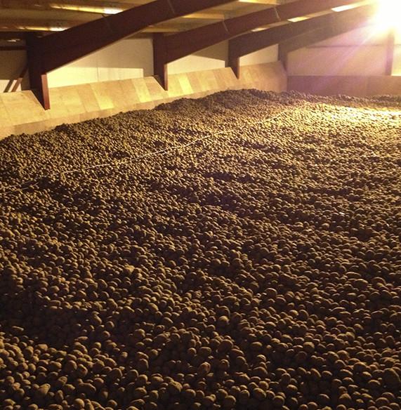 Crop Potatoe Storage